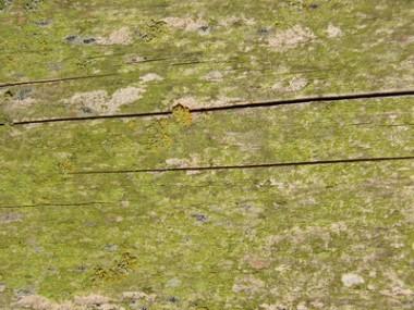 Jak odstranit plíseň ze dřeva
