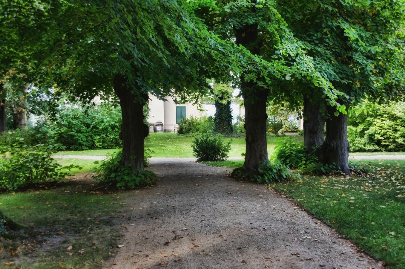 Nesm proj t pasivn klimatizace se postav teplu do cesty for Garden deciduous trees