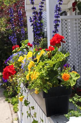 Balkonove kvetiny 3