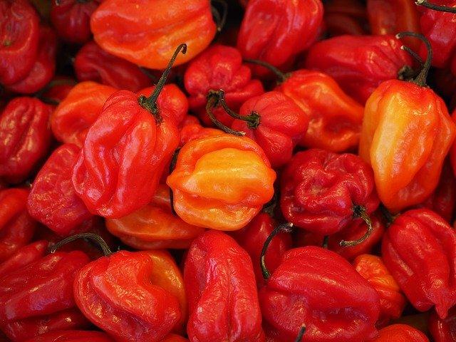Tvarově a chuťově zajímavější odrůdy chilli bývají náročnější na pěstování