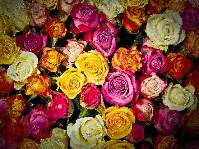 Vysaďte růže na podzim. Příští rok vás odmění krásnými kvšty