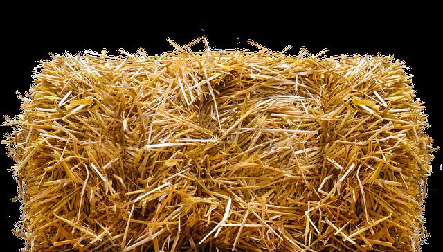 Místo listí či trávy ochraňte stonky levandule kvalitní slámou