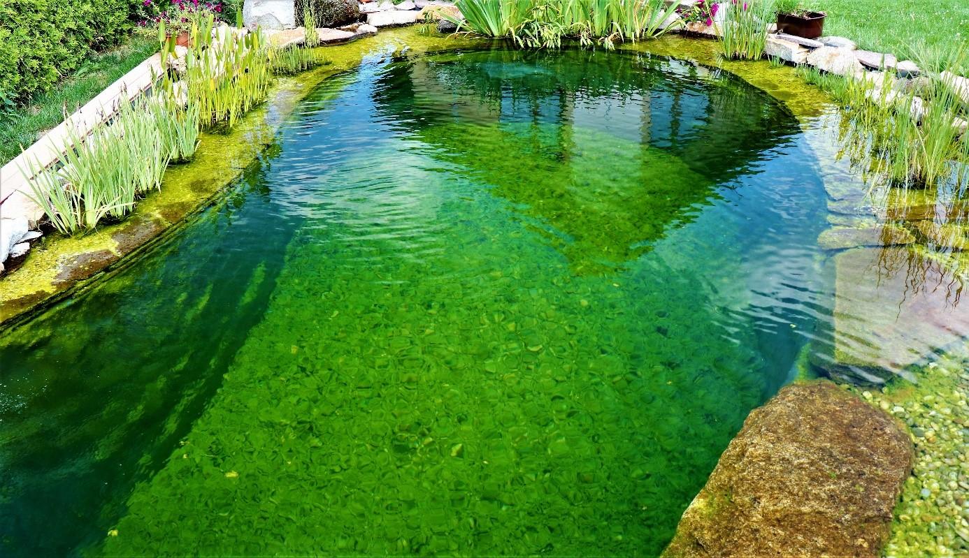 Řasy v zahradním jezírku se množí, když mají dostatek živin z nečistot.