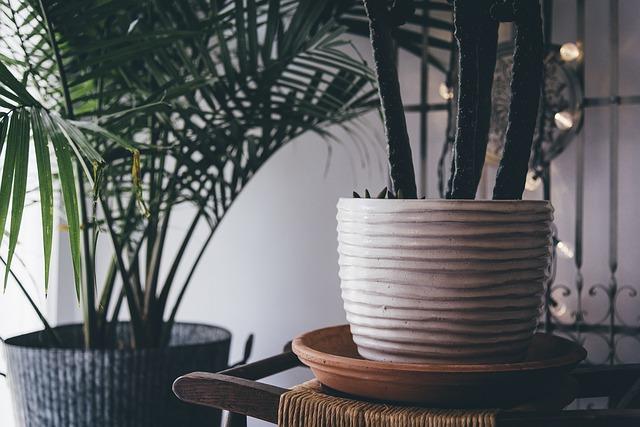 Ozvláštněte své bydlení dostatečným počtem pokojových rostlin